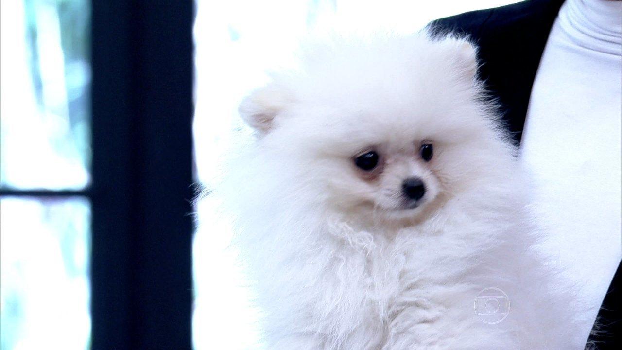 Ana Maria apresenta seu novo xodó: a cadelinha Paçoca
