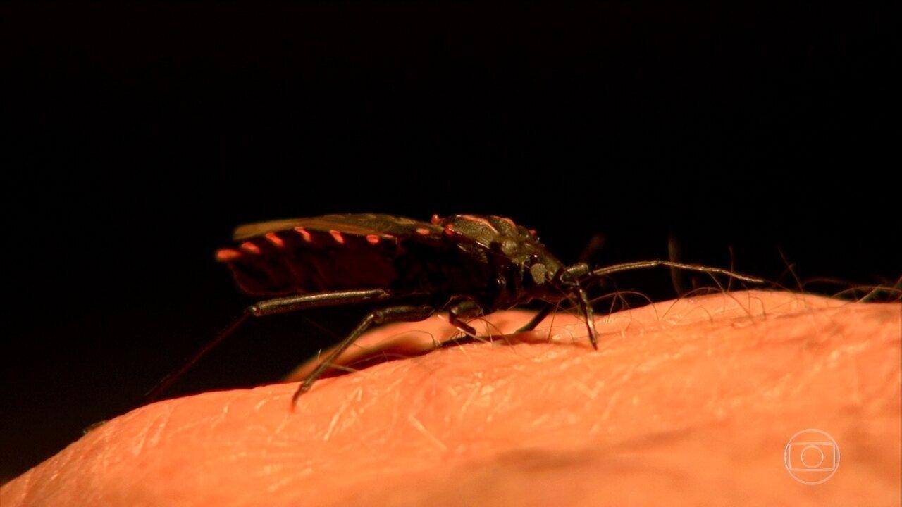 Barbeiro, inseto transmissor da Doença de Chagas, chega às grandes cidades próximas a áreas rurais