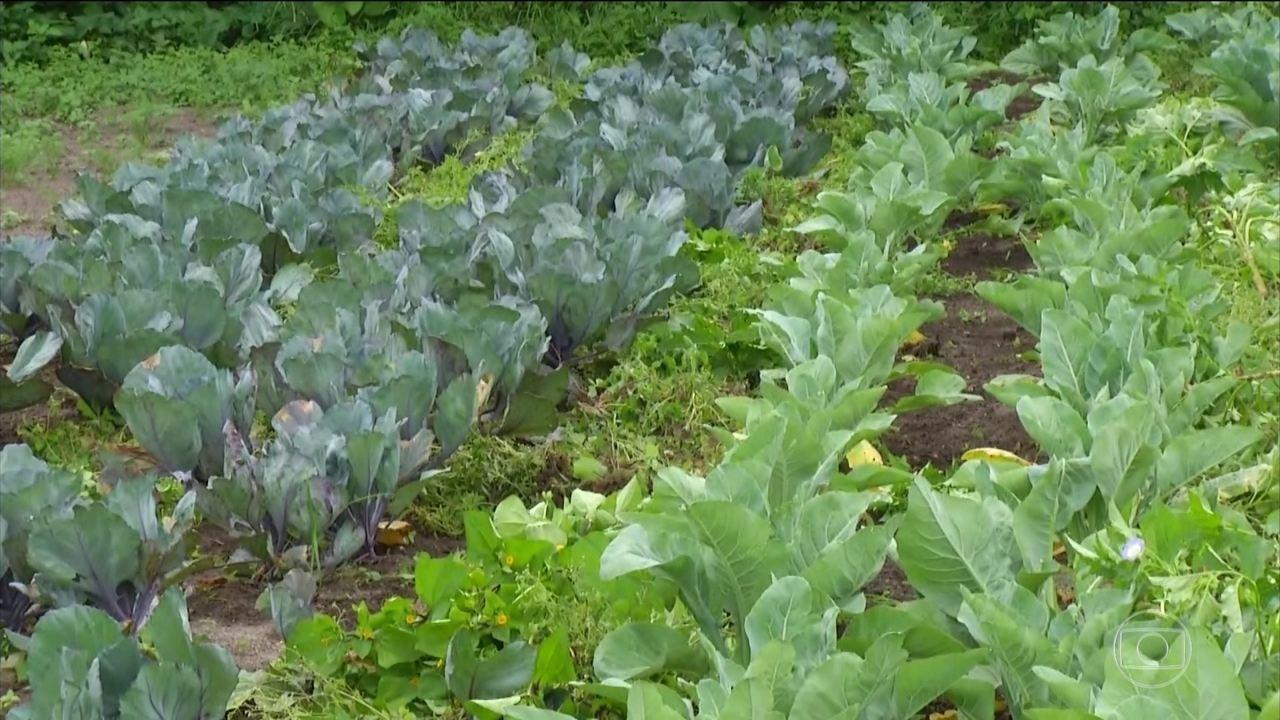 Você sabe qual é a diferença entre orgânico, hidropônico e agroecológico?