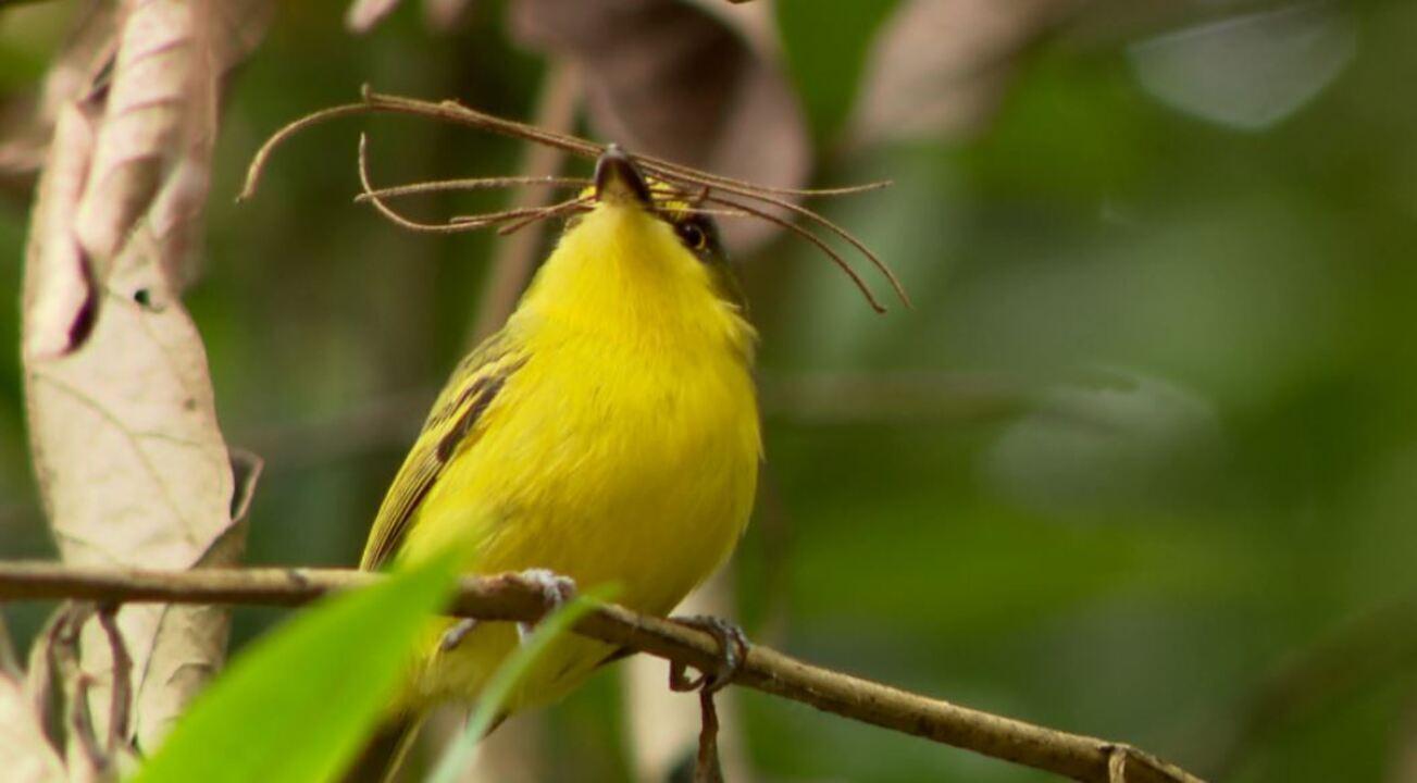 Terra da Gente encontra berçário de aves da Mata Atlântica