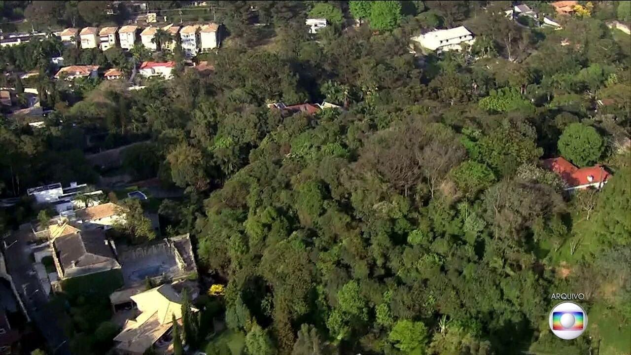 Prefeitura da capital decide construir jardins verticais na avenida 23 de Maio