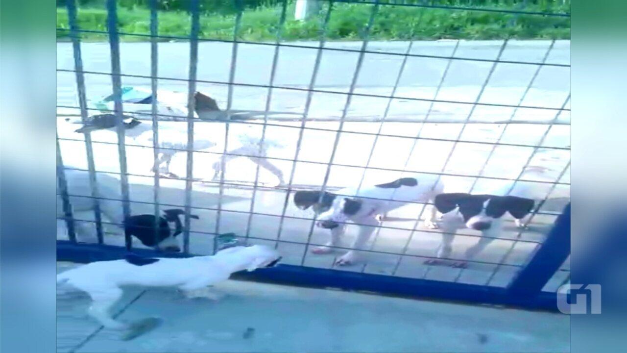 Mais de 20 cães são abandonados em portão de creche em Sorocaba
