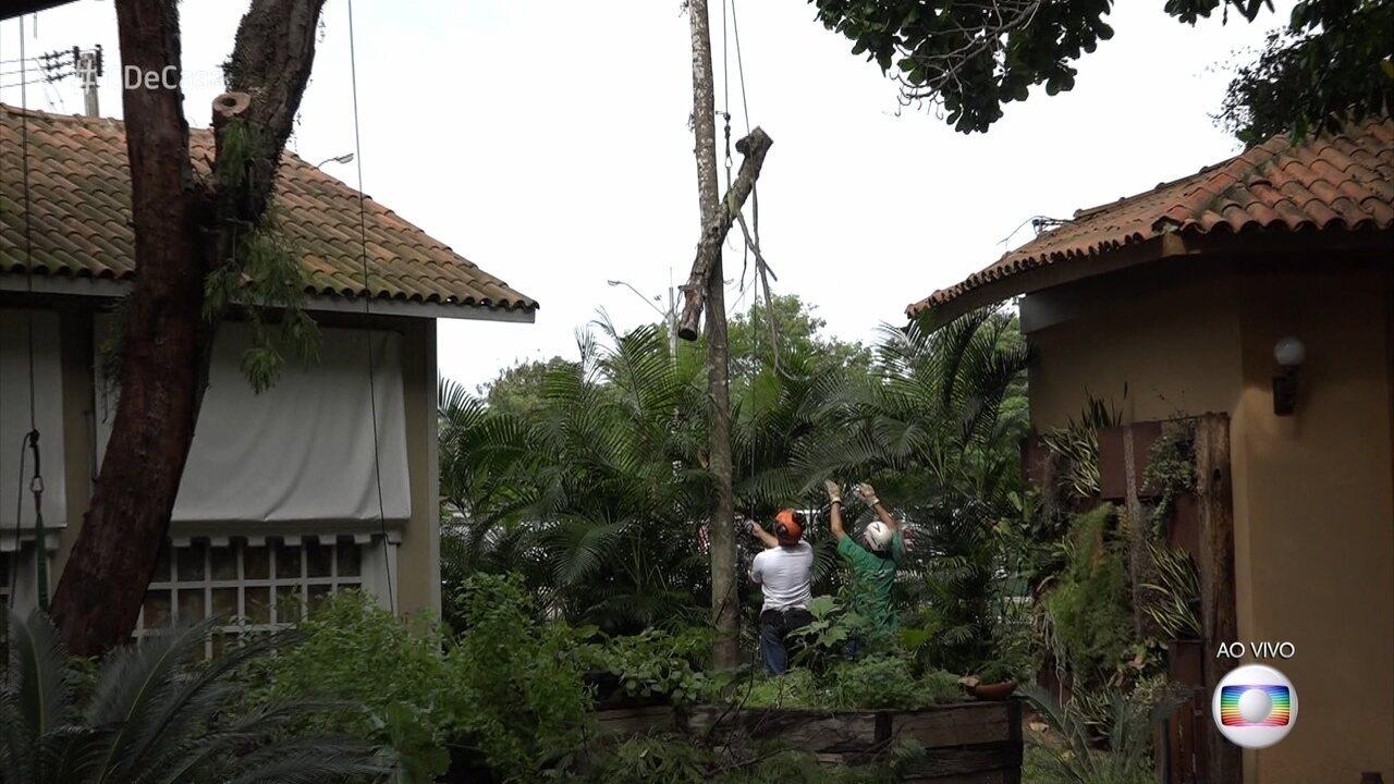 Saiba a quem recorrer quando árvores ameaçam cair ou abalar estruturas