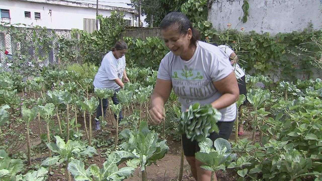 Assista a reportagem completa do JT1: Horta comunitária auxilia moradores de bairro de Santos