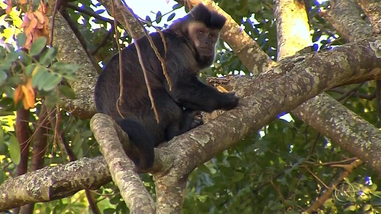 Macacos morrem e ficam feridos ao passar por fiação elétrica próxima a área de preservação