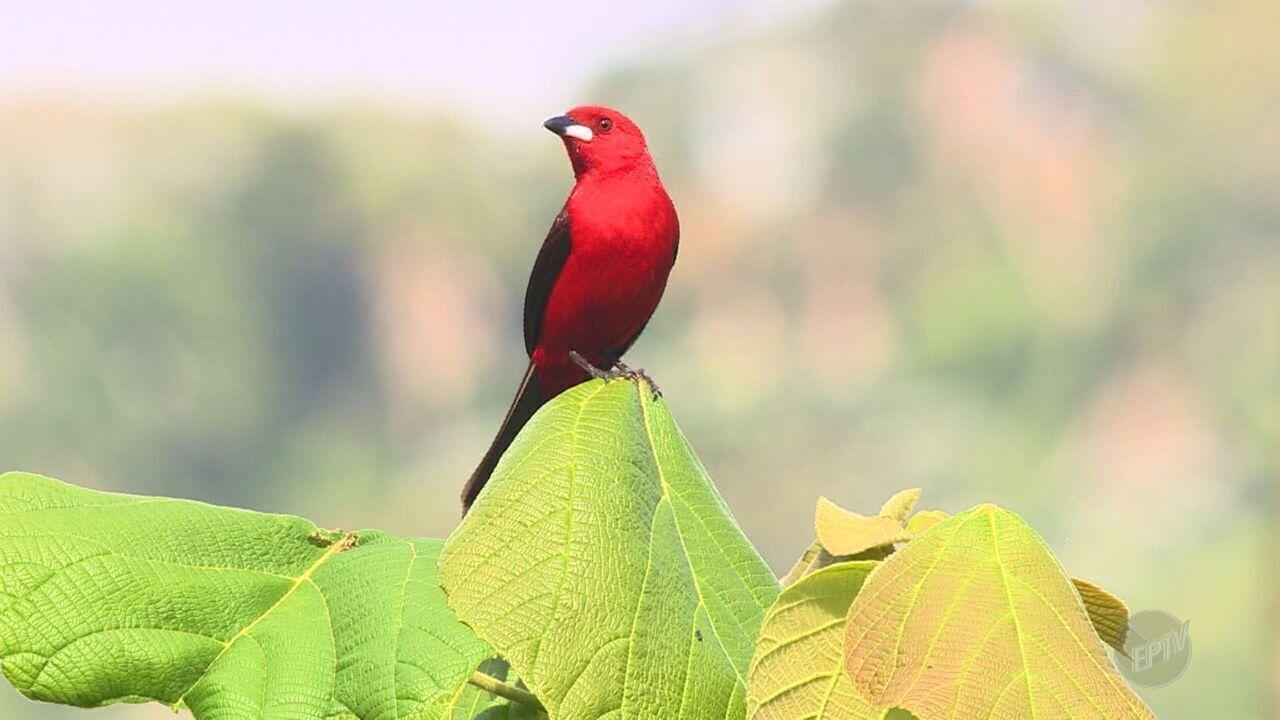 Observação de aves ganha cada vez mais adeptos; veja o motivo