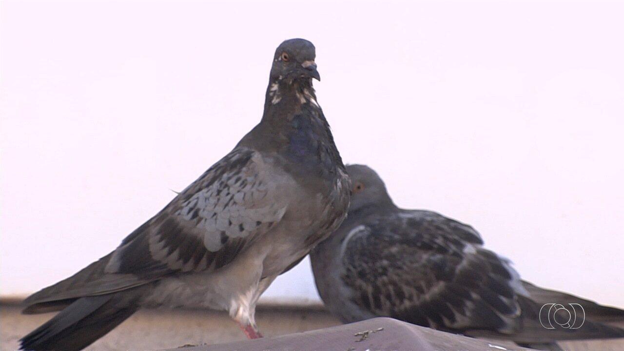 Família sofre com infestação de ácaros causada por pombos