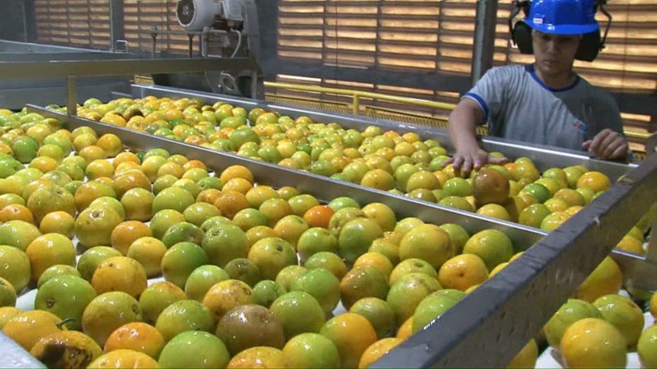 Produção de laranja deve ser 30% maior no Paraná em 2017