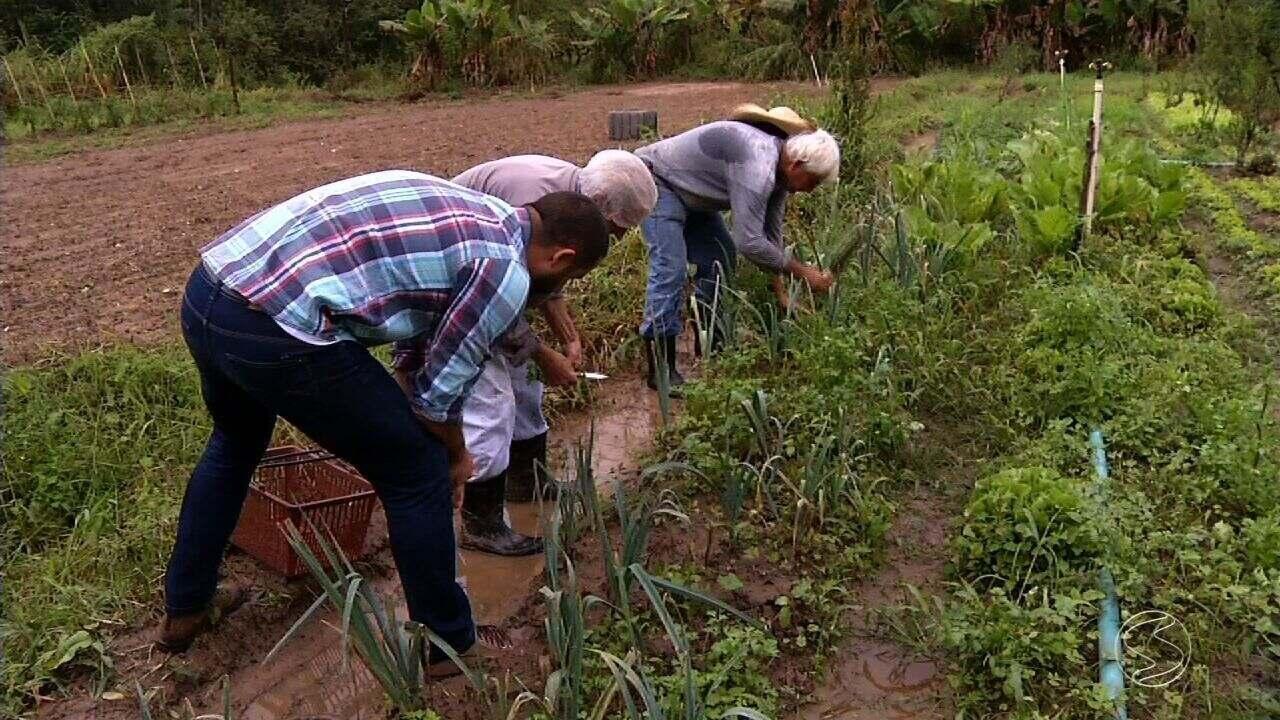 Setor de agronegócio cresce no Sul do Rio