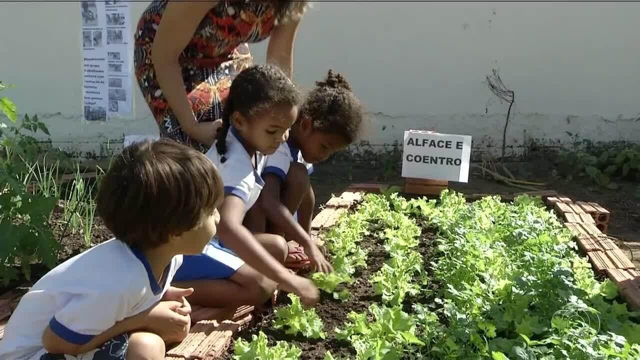 Muitas vezes Cultivar e colher alimentos motiva crianças a comerem de forma  ZG16