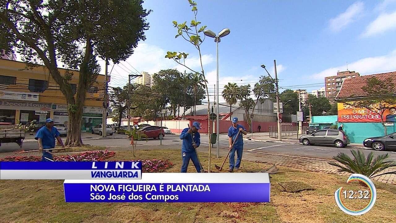 Nova figueira foi plantada no lugar da que foi retirada na praça Dom Bosco
