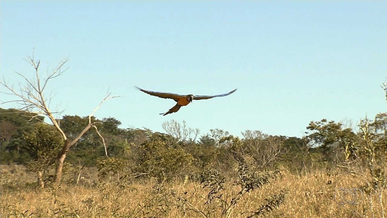 Ibama devolve à natureza araras e tucanos apreendidos com traficantes de animais