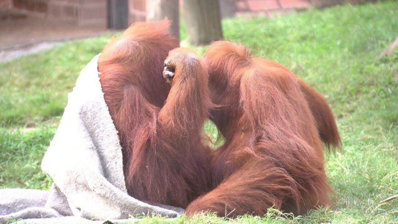 Animais recebem cuidados especiais para enfrentar o frio no zoológico do Rio