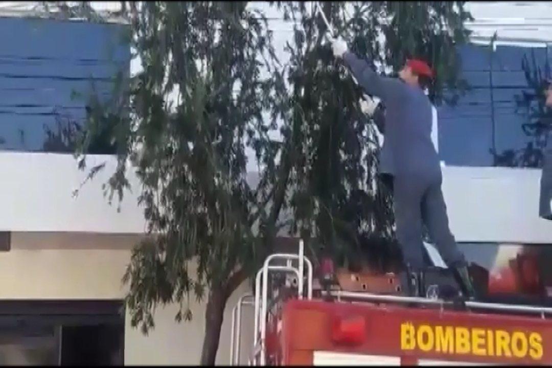 Bombeiros apreendem ouriço-caixeiro em Divinópolis