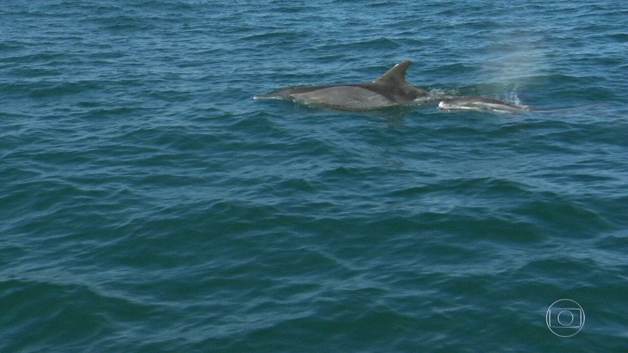 O RJTV pega uma carona com pesquisadores, em busca de golfinhos, na Baía de Guanabara