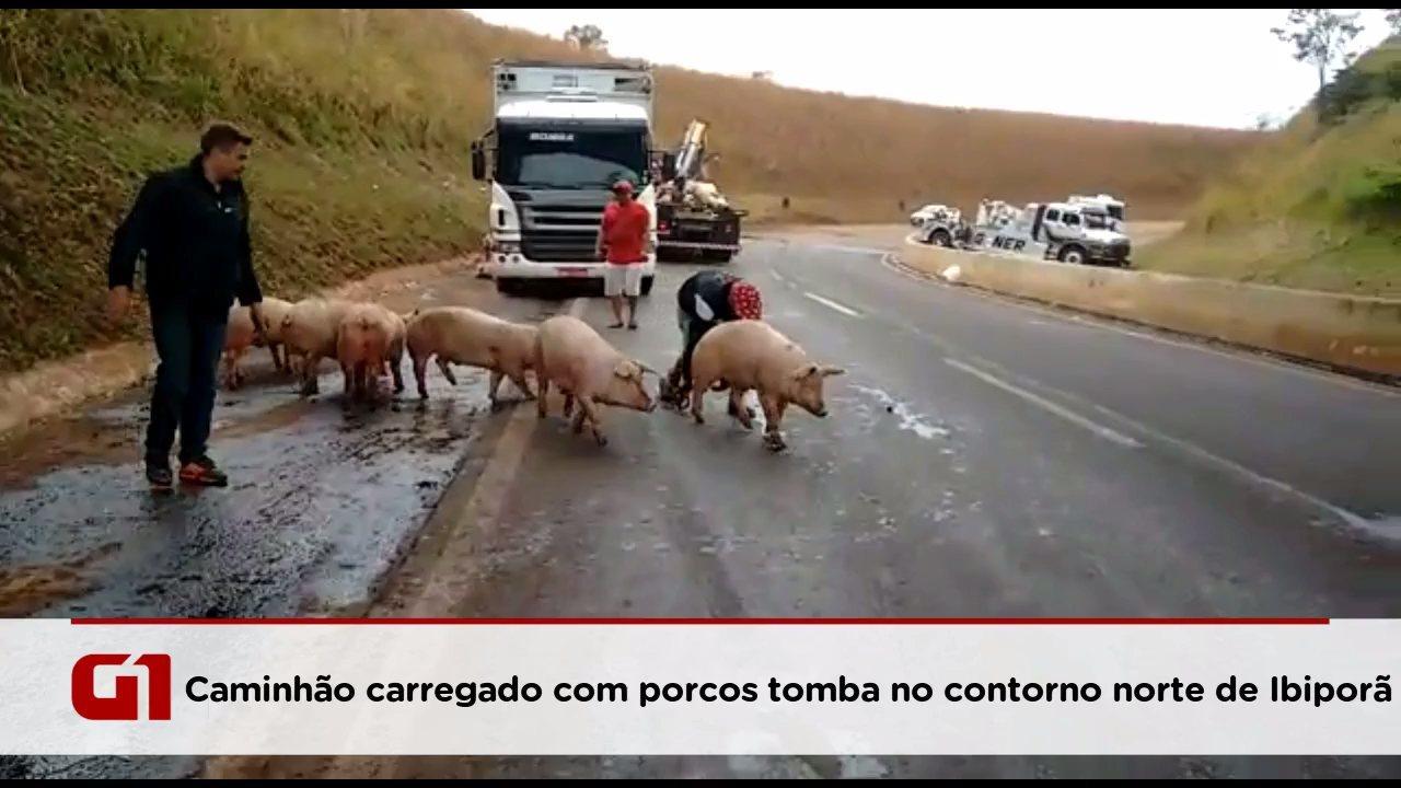 Carreta carregada com porcos tomba no contorno norte de Ibiporã