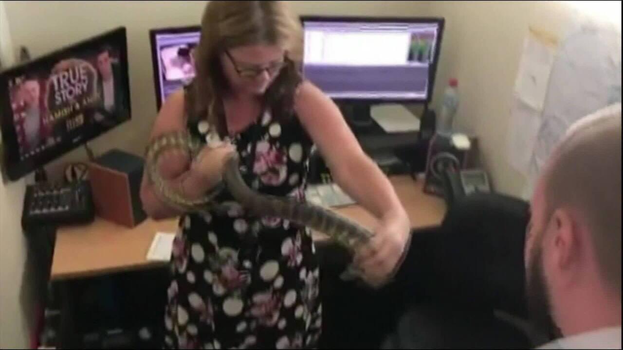 Cobra é encontrada em redação de canal de jornalismo na Austrália