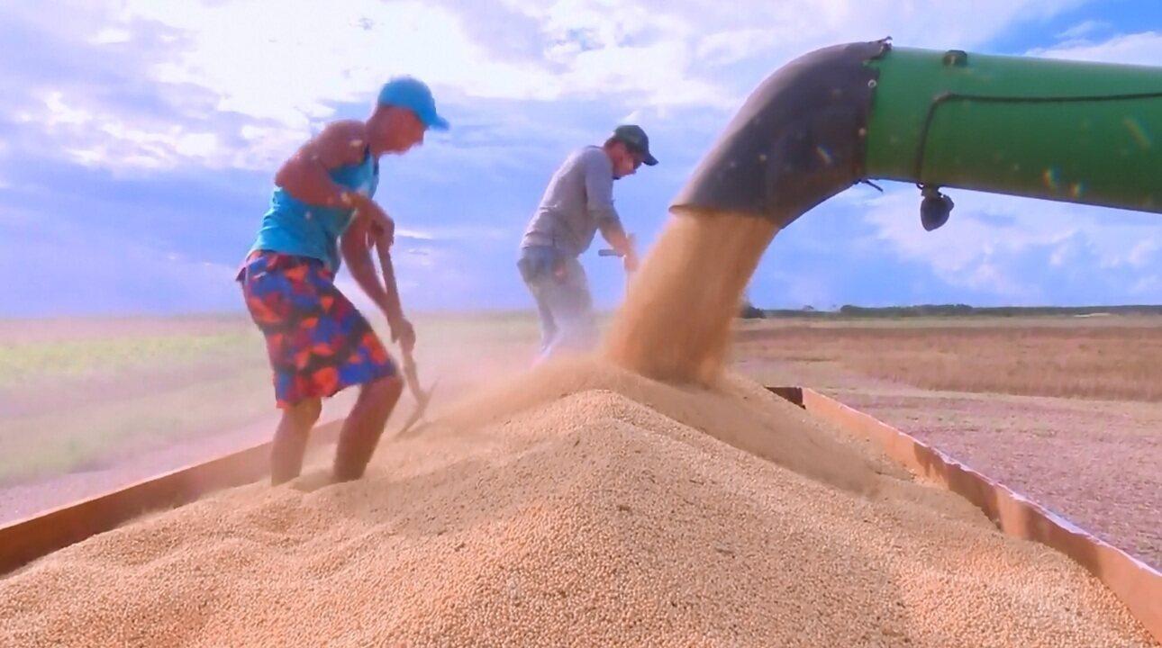 Antes improvável, produção de soja lidera o agronegócio amapaense