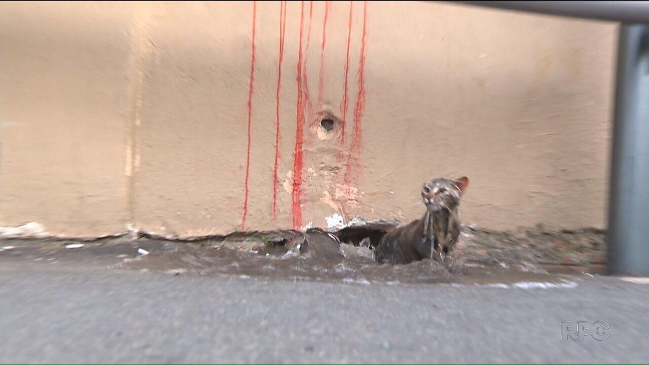 Depois de quatro dias preso numa tubulação, gato é salvo pelo Corpo de Bombeiros