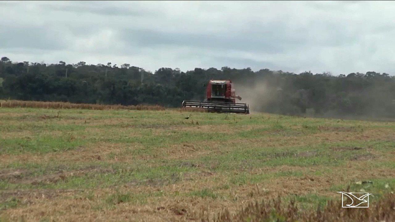 Produtores colhem super safra de grãos no Sul do MA