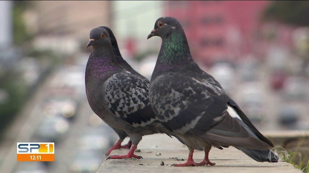 Igreja da Consolação encontra solução para problemas com pombos