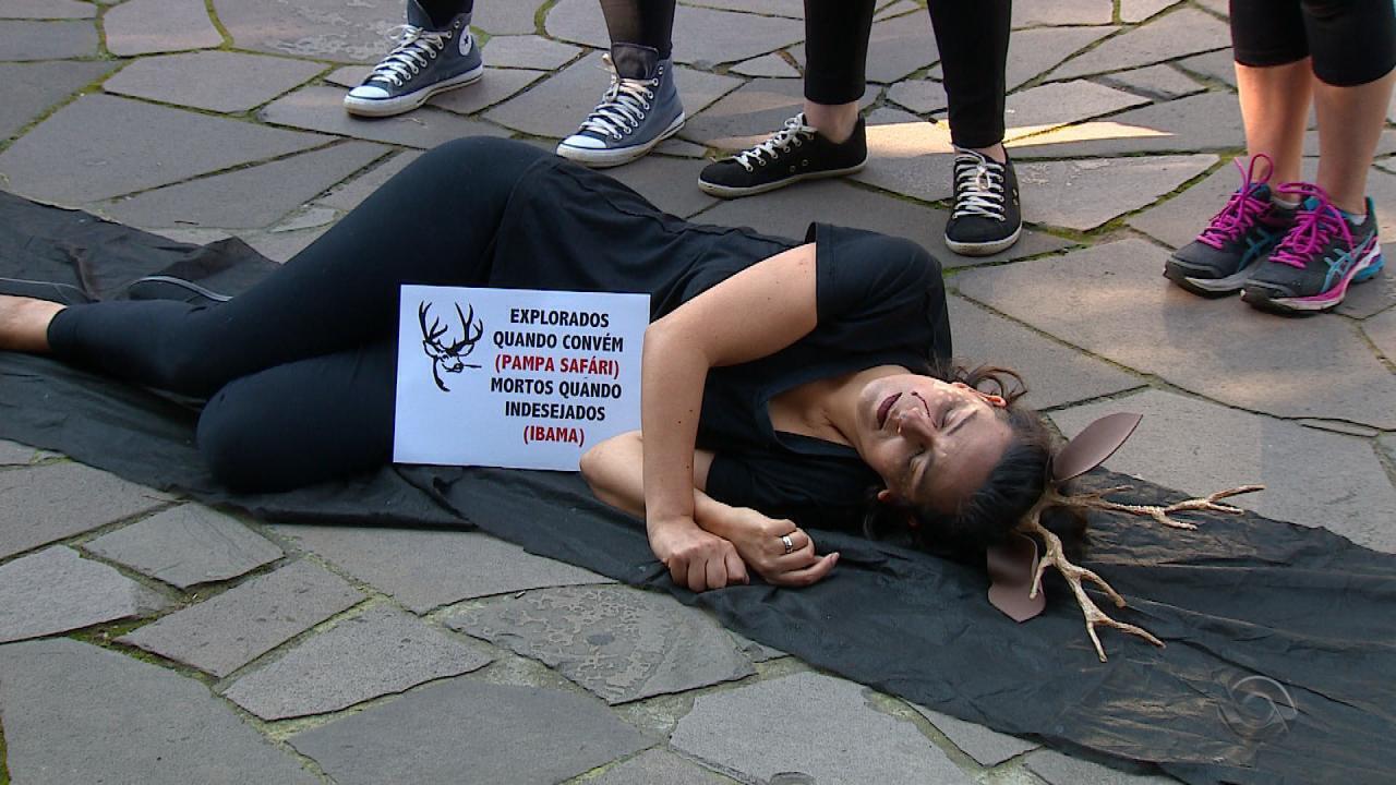 Ativistas protestam contra o sacrifícios de animais do Pampas Safari