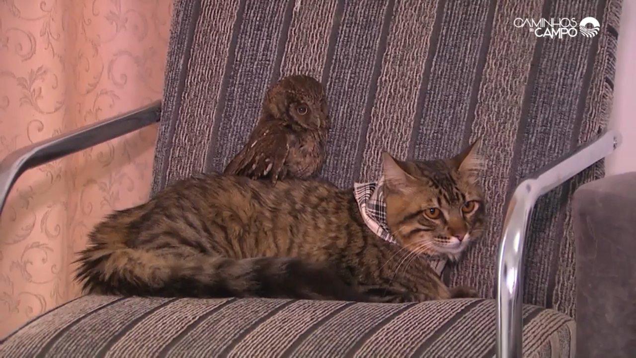 Gato adotando coruja? É verdade! Você vai conhecer essa história no 'Caminhos do Campo'!