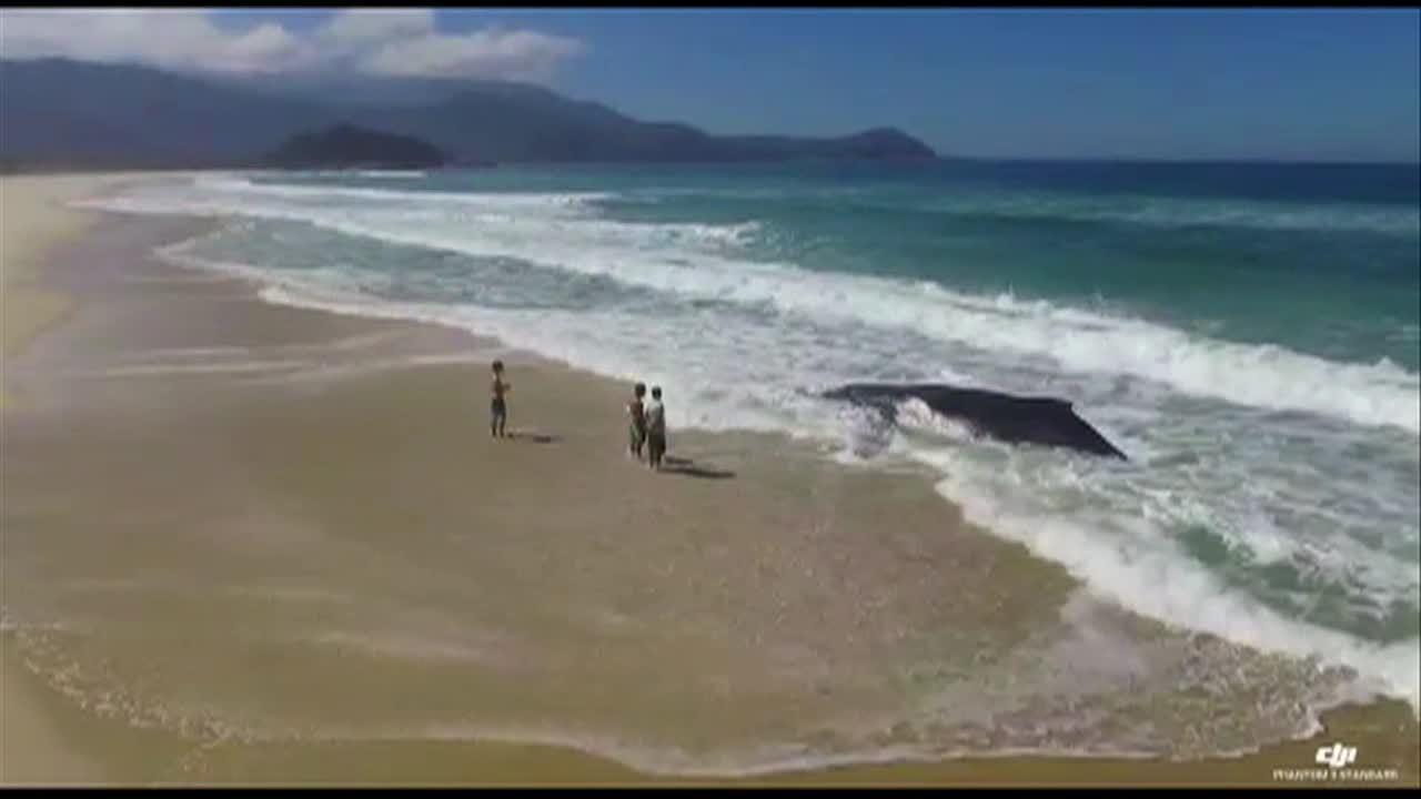 Baleia encalha na Praia do Sul, em Ilha Grande, em Angra dos Reis, RJ