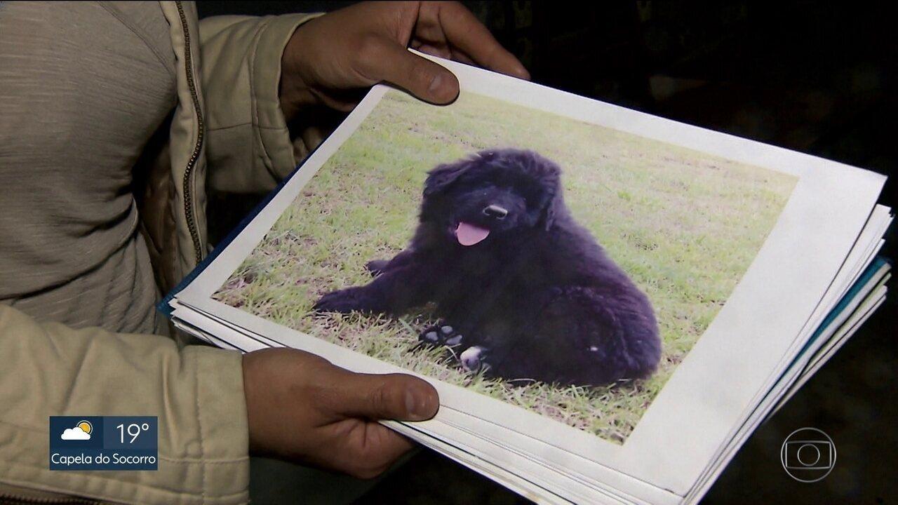 Ladrões levam 40 cães de um canil na capital e empresa ajuda polícia nas buscas