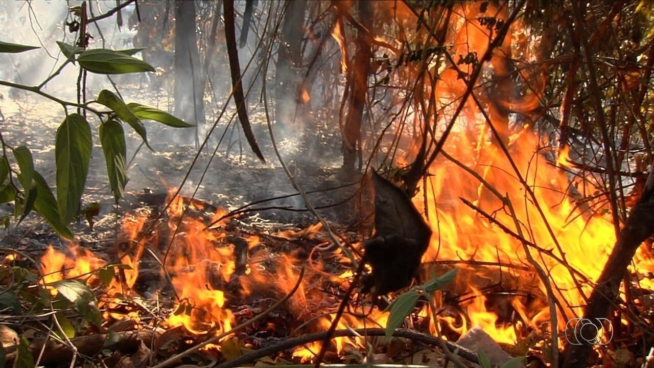 Corpo de Bombeiros combate incêndio no Jardim Botânico, em Goiânia