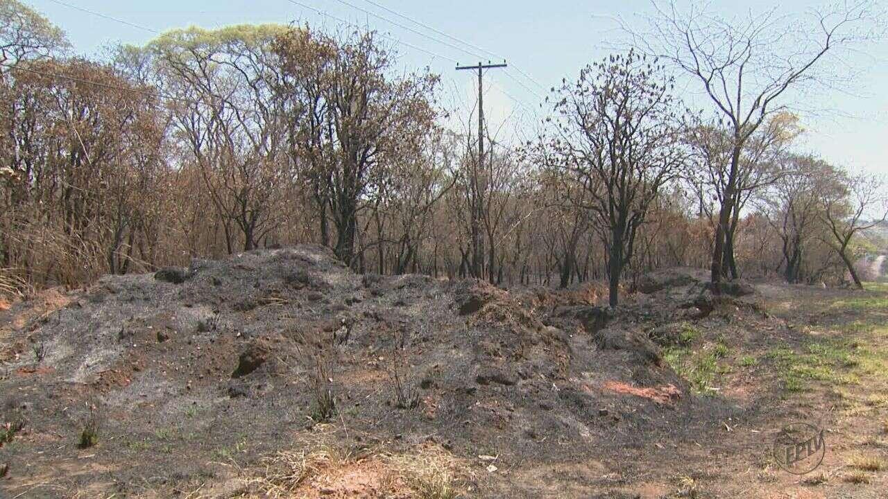 Tambaú, SP, é a segunda cidade do estado em número de queimadas neste mês