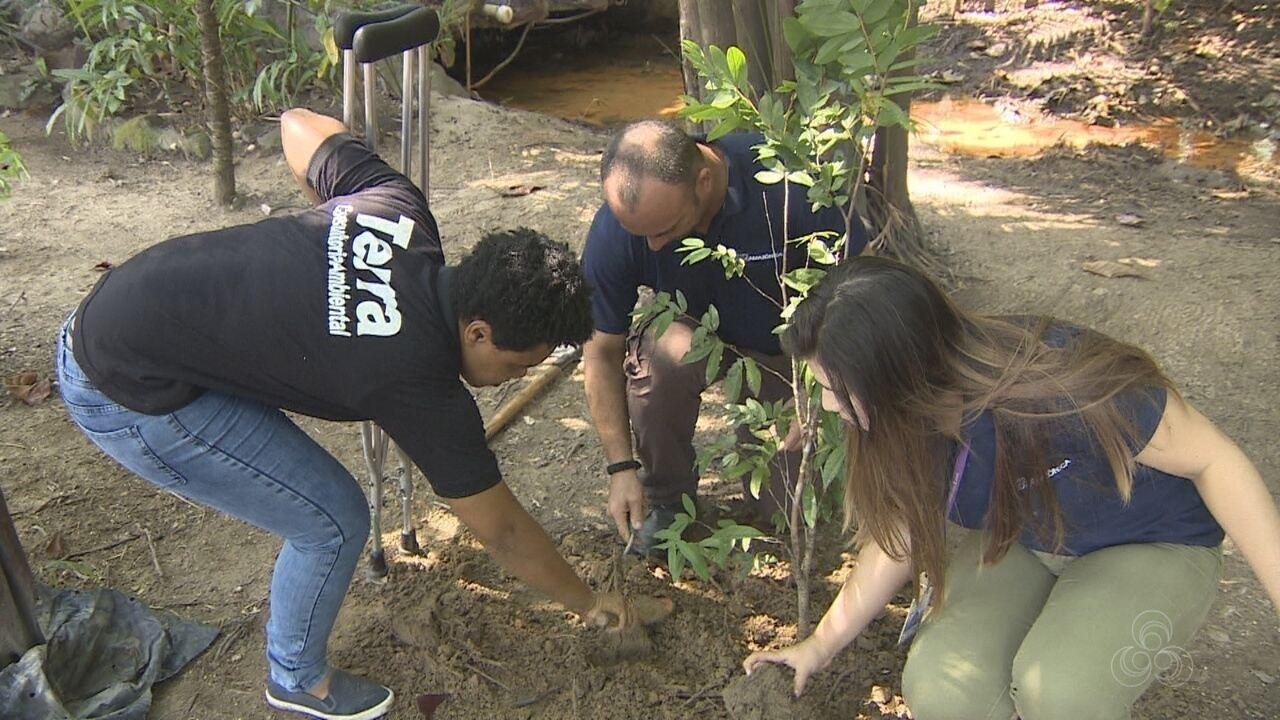 Dia da árvore é celebrado em Manaus