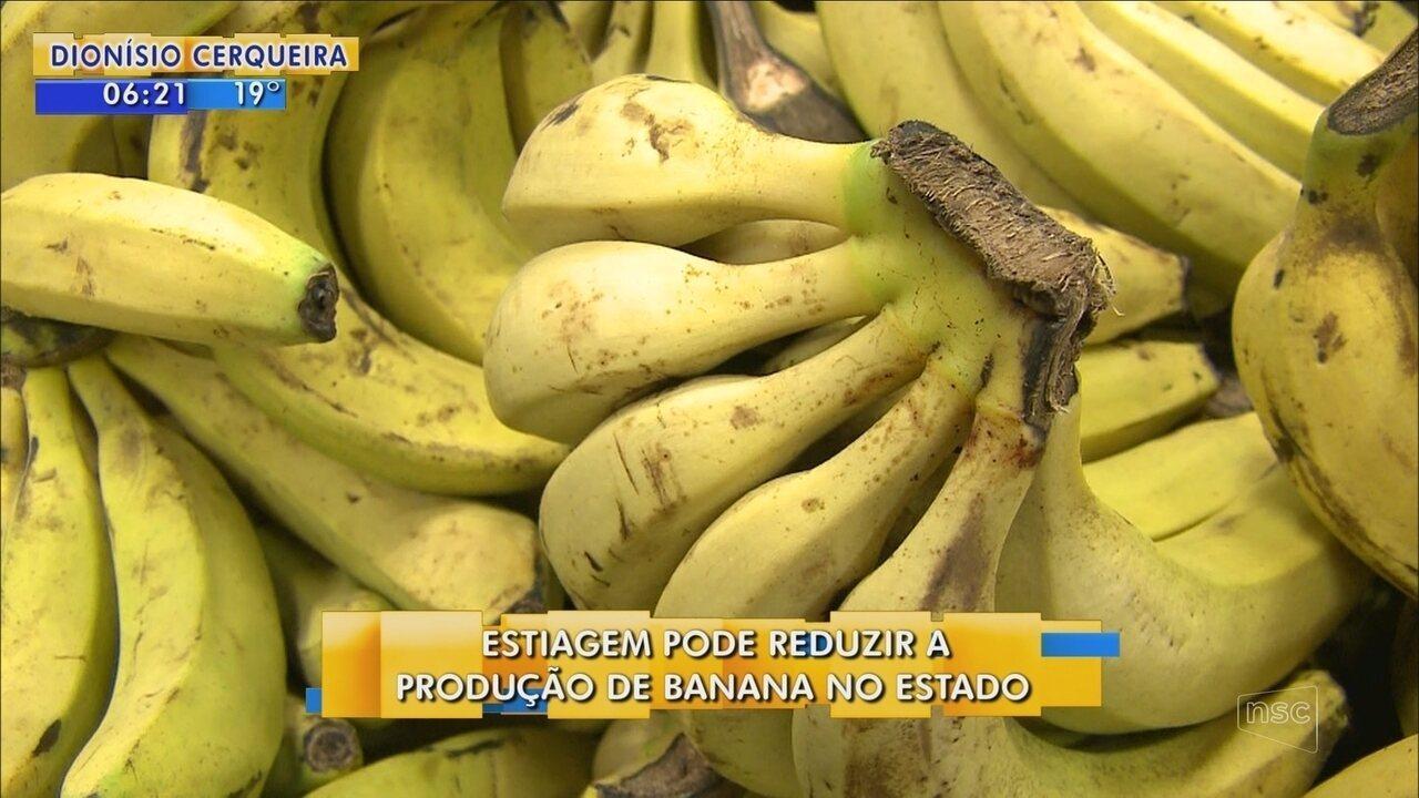 Estiagem pode reduzir produção de banana em SC