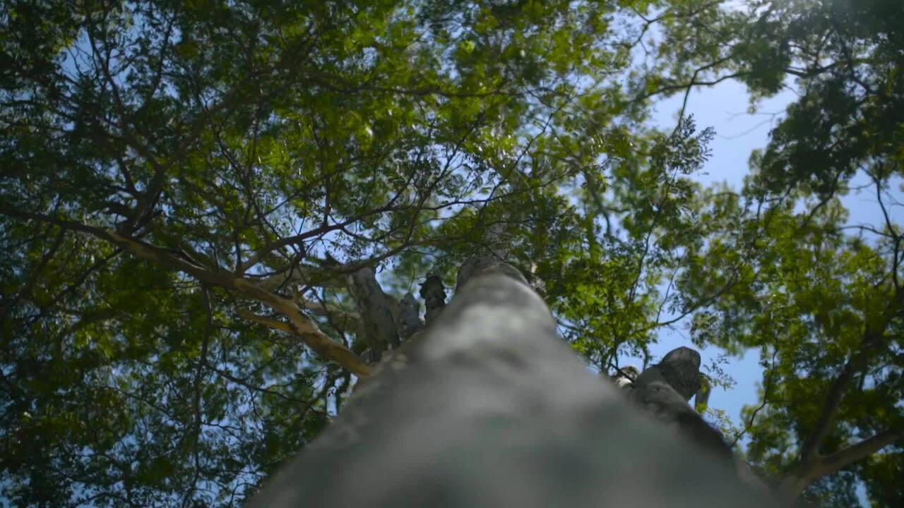 Verdejando completa 5 anos com ações pela Grande São Paulo