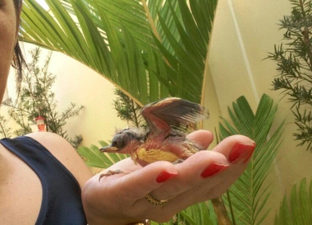 Enfermeira resgata aves e ensina os filhotes a voar e se alimentar