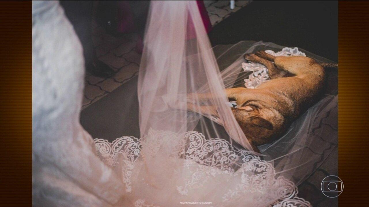 Casal adota cachorro que invadiu casamento e deitou no véu da noiva