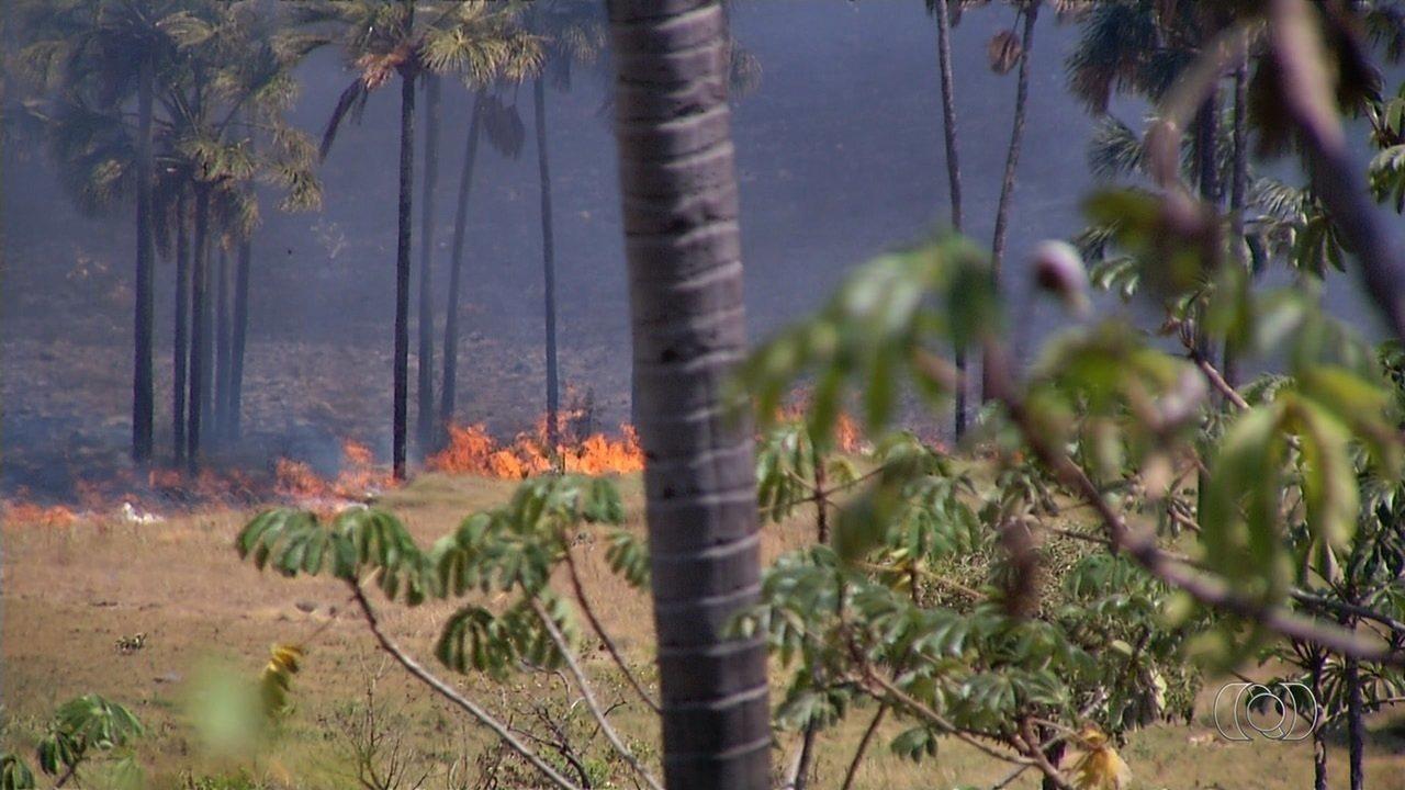 Voluntários fazem força-tarefa para combater incêndio na Chapada dos Veadeiros