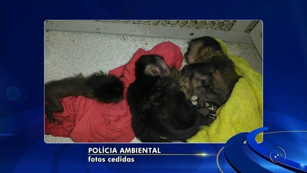 Mulher é flagrada duas vezes no mesmo dia ao transportar macacos em mochilas
