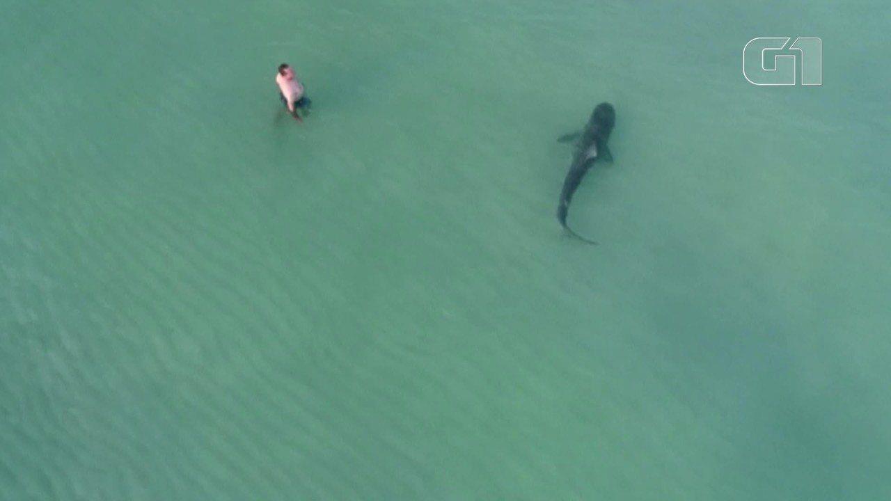 Drone mostra tubarão próximo a banhistas em Miami Beach, nos EUA