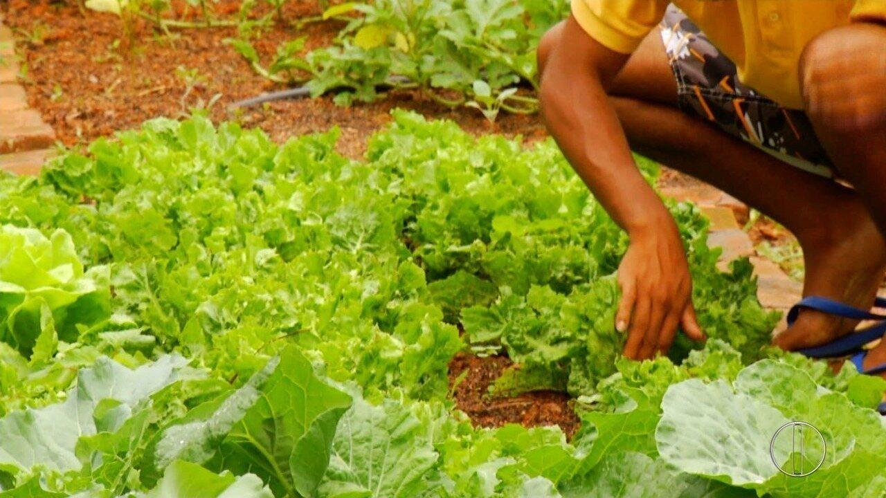 Internos plantam, colhem e consomem o alimento