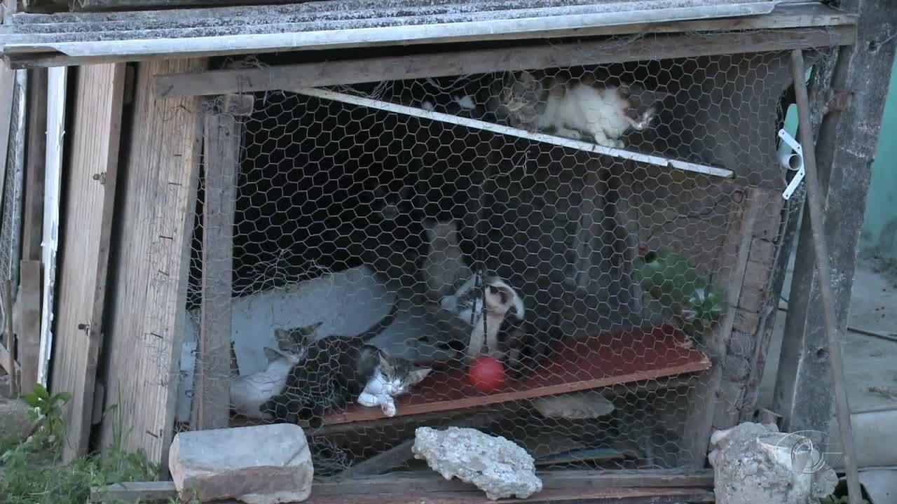 Moradores denunciam abrigo clandestino com mais de vinte animais na Cidade Universitária
