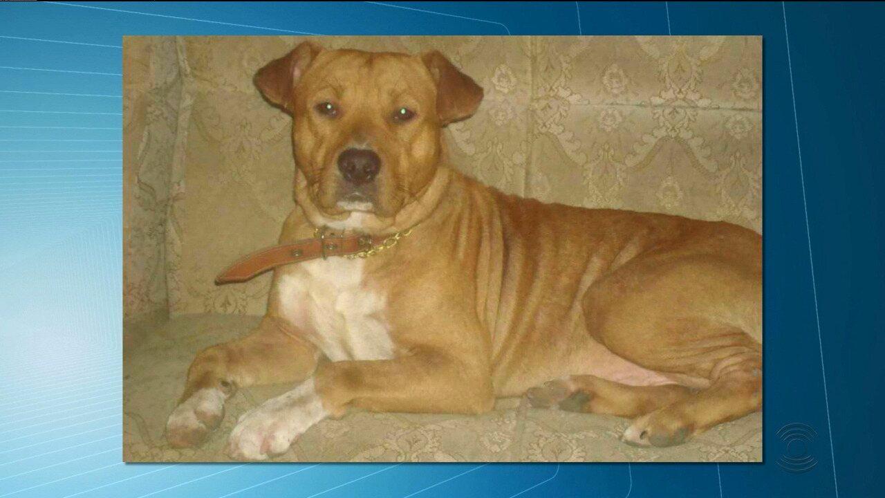Menina de 3 anos é atacada por cachorro da raça pitbull, em Campina Grande