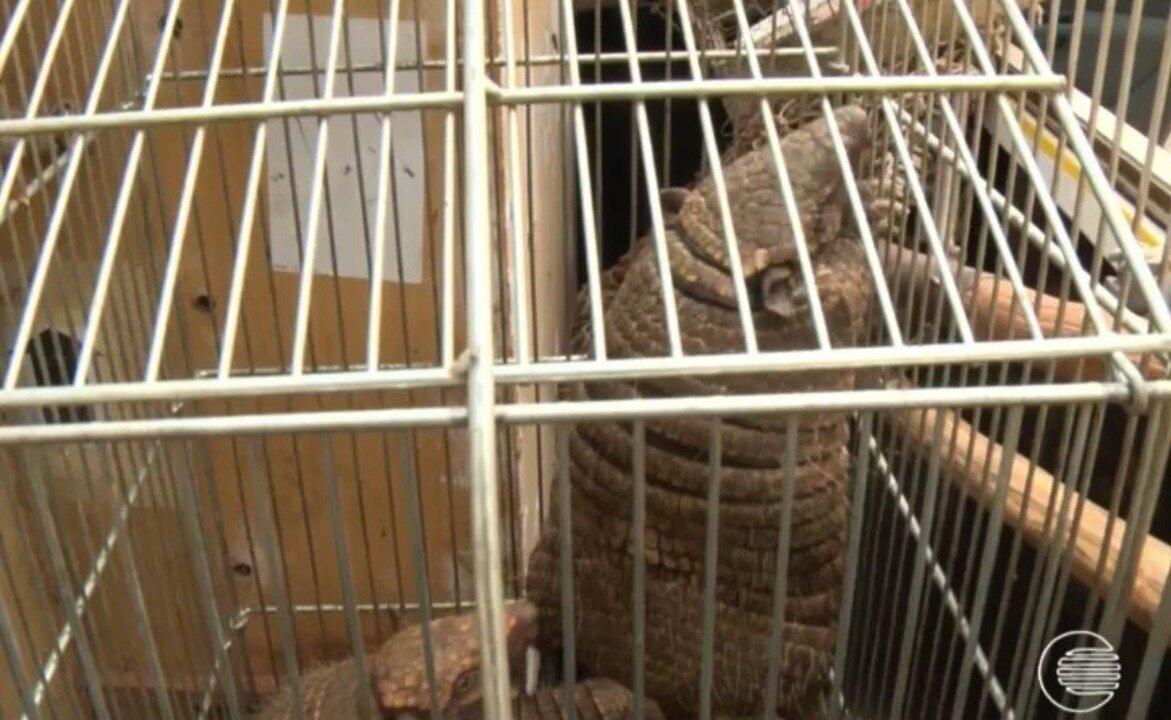 Operação da Poícia Civil apreende dezenas de animais silvestres em Capitão de Campos