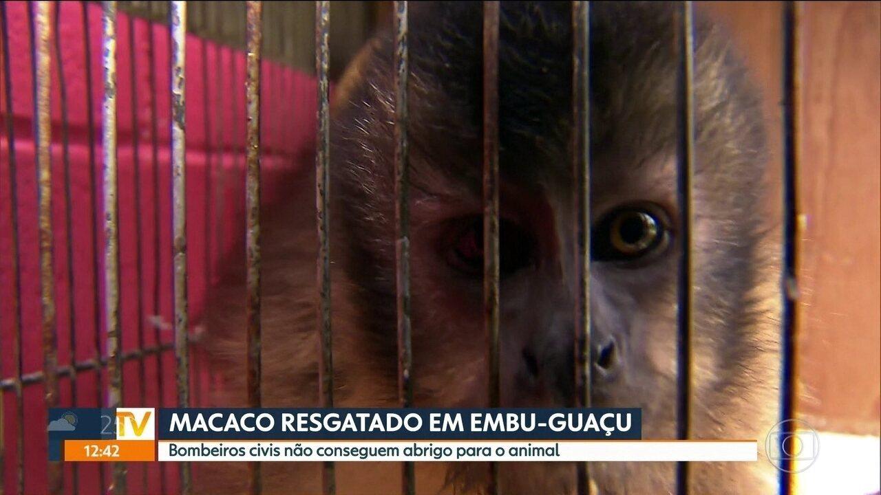 Macaco é resgatado em Embu-Guaçu
