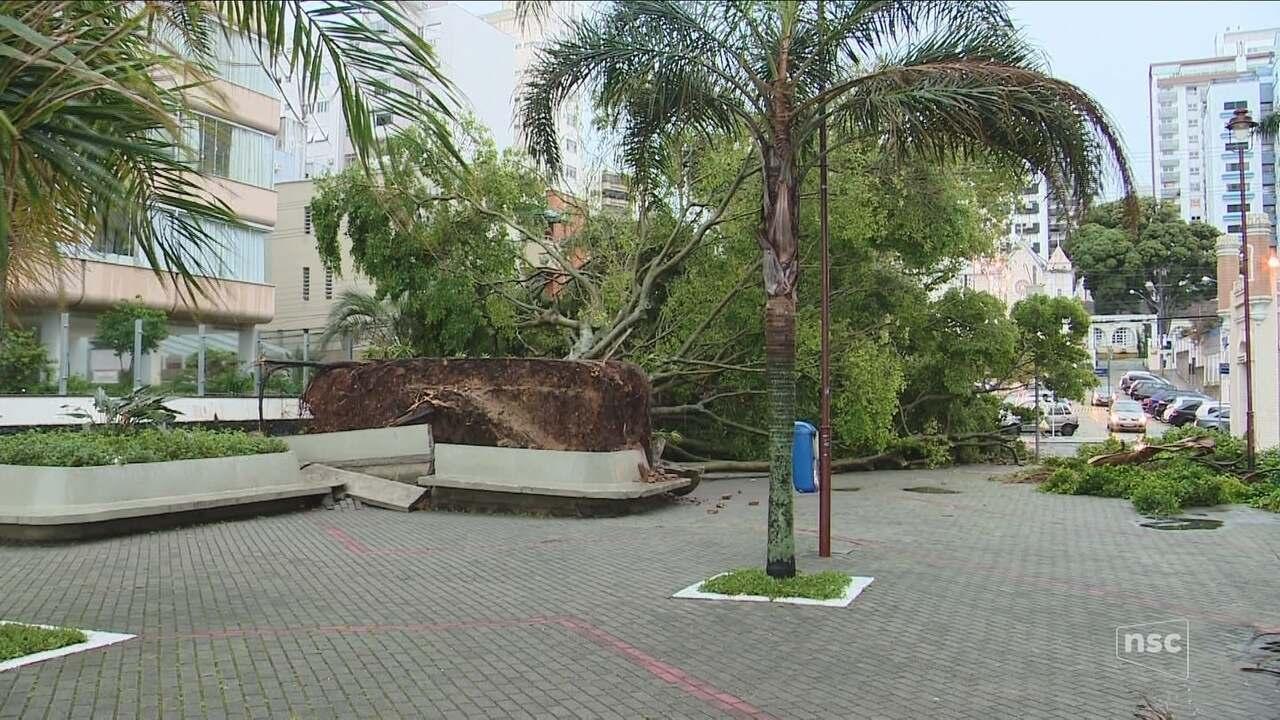 Chuva e vento derrubam árvore em Florianópolis