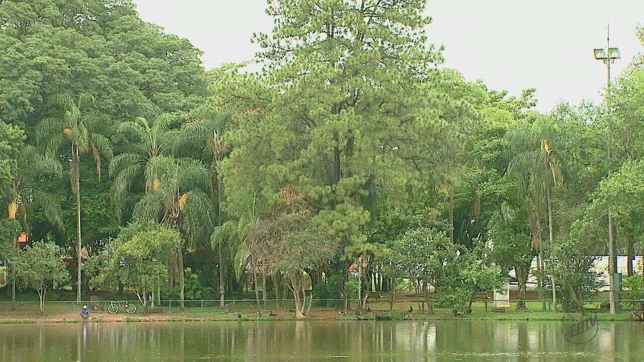 Ranking Ambiental: Araras, SP, cai 313 posições e leva nota 0 em arborização