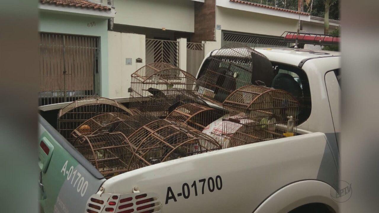 Polícia Ambiental encontra aves mantidas em cativeiro em cidades da região