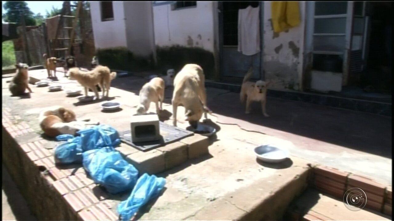 Vigilância Sanitária interdita ONG que abriga animais em Itararé