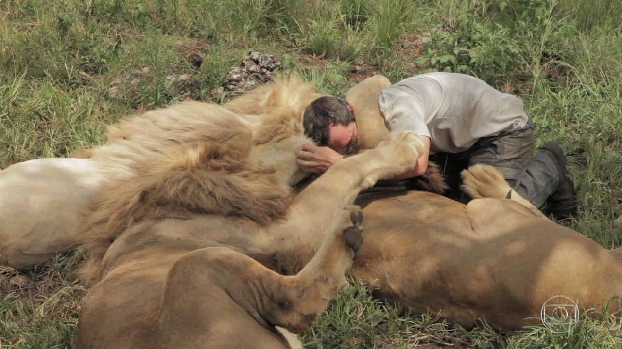 Surpreenda-se com o amigos dos leões