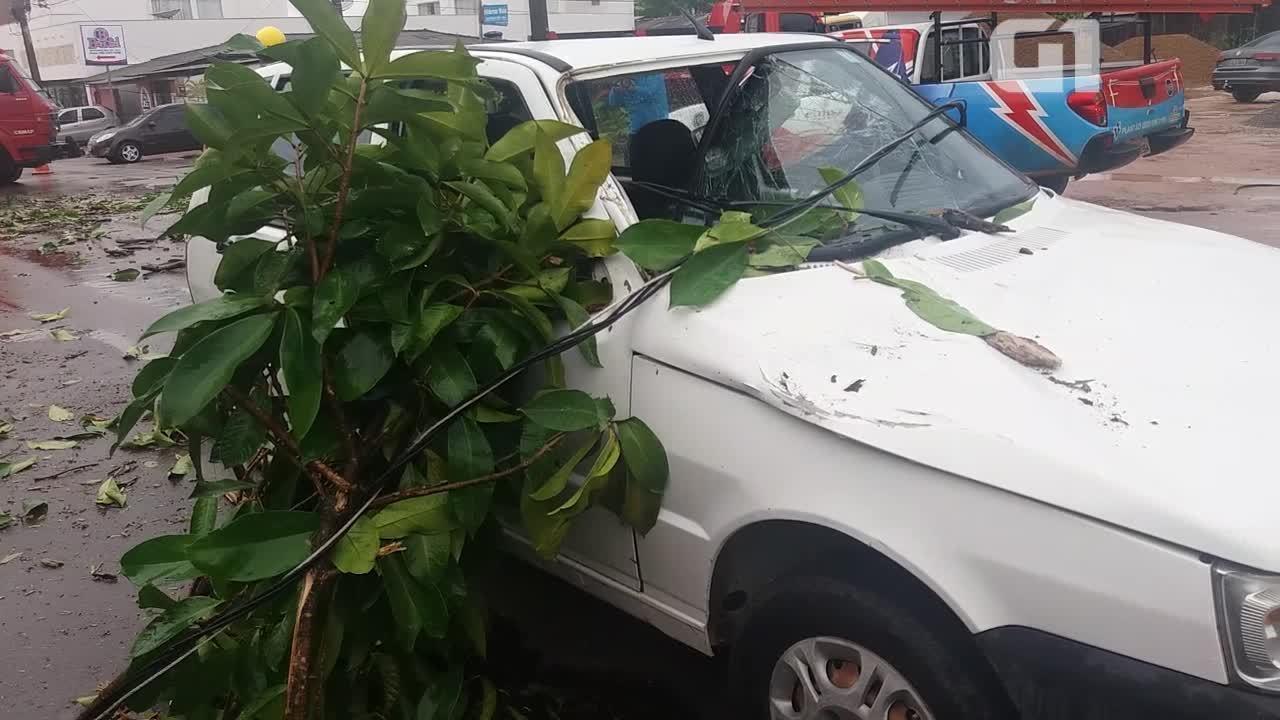 Árvore cai em cima de carro na Zona Sul de Macapá